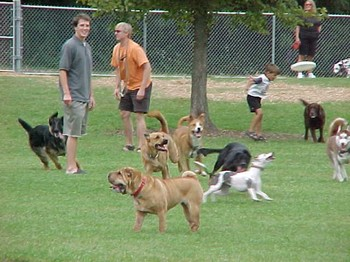 Frisbee_chase_1_sept_25_2004_2